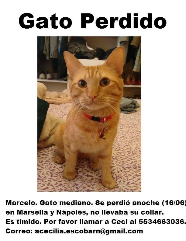 Mi gato Marcelo aún no aparece. Les voy a agradecer muchísimo que me ayuden otra vez con un RT. http://t.co/G6VwywkOip