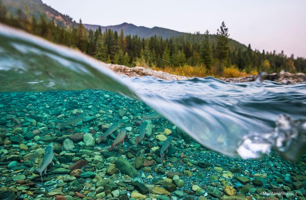 It's time for a #MontanaMoment. http://t.co/9E8k2ELcI8