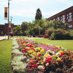 Gorgeous day on campus! @UniOfHull gardeners are on point. http://t.co/0cukincHaO
