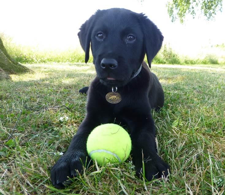 Introducing Heidi! Our latest puppy, already a tennis ball fan, pls RT if you think she's gorgeous! http://t.co/AkJpXCcSKK