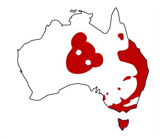 Fact sheet: the Drop Bear (Thylarctos plummetus) is a predatory marsupial related to the koala http://t.co/EgVgapFCkg http://t.co/u7o9iTm9nY