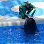 .@SeaWorld #Orlando News & Notes for July 2015 is now live at: http://t.co/Jd7HYzSxIg http://t.co/GYDHGLuJoj
