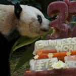Conoce a Jia Jia el panda más longevo del mundo..¡que está de cumpleaños! → http://t.co/M9p8Jo91OM http://t.co/YnRxy7V8mW