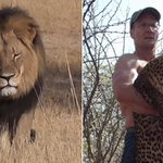 U.S. dentist reported to have killed Cecil the lion is excoriated online http://t.co/cKBYPGUFsn http://t.co/x84UwpuUpp