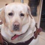 Владимир Маркин: Обещаем найти украденную у слепой девушки собаку-поводыря http://t.co/qz6zx7J3ii http://t.co/KZ4lh46s5e
