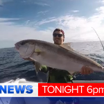 Kingfish are the prize catch this week off the Gold Coast @LukeBradnam has details on where to go #9News Saturday 6pm http://t.co/hBvIzMal0Q