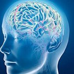Revelan el secreto de la inteligencia: hacer más con menos ► http://t.co/cQI28Pu4qA http://t.co/LH3sK2d0N2