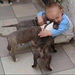 qnd eu vejo cachorros http://t.co/xVEcbftQW8