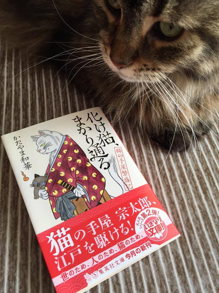 【本日発売】「化け猫、まかり通る 猫の手屋繁盛記(集英社文庫)」どこからどう見ても白猫の宗太郎、人の姿に戻るために肉球プニプニの猫の手貸してます!ナツイチ帯の1巻もよろしくお願いします(=^x^=) http://t.co/Zk88zzknEp