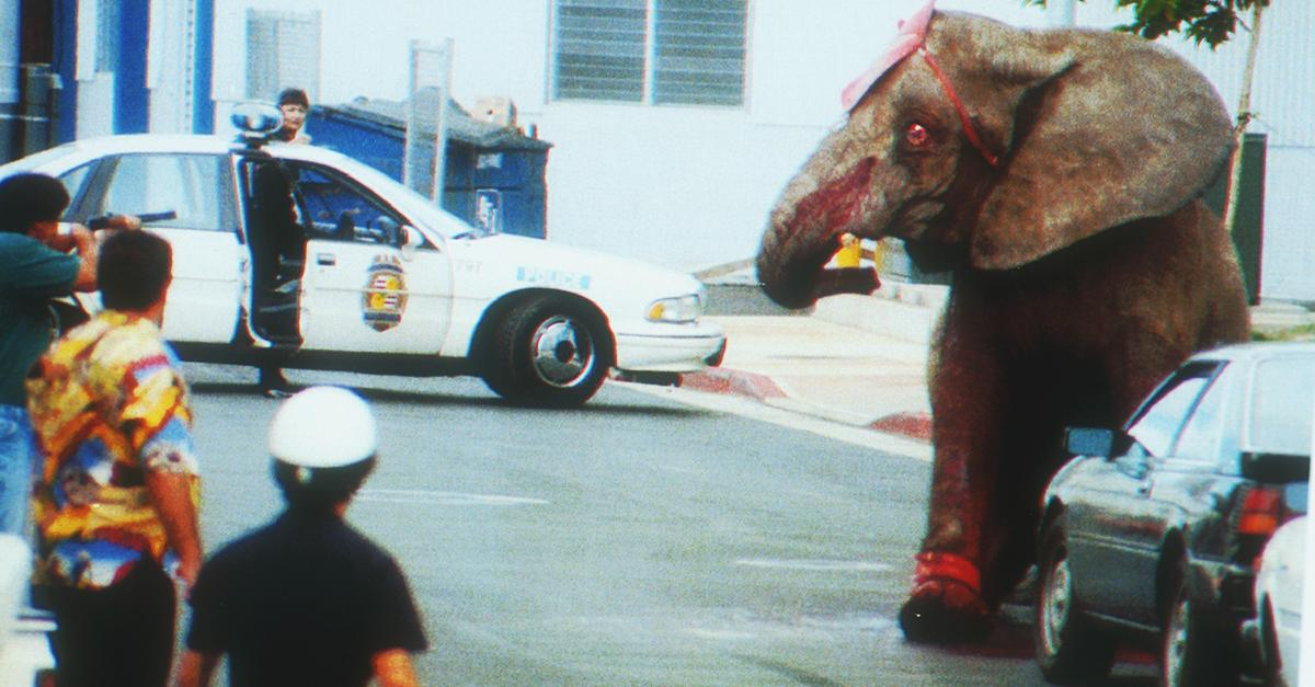 RT @peta: Today is the anniversary of the Tyke the elephant's murder. She was shot dead after escaping the circus. #RIPTyke http://t.co/QKF…