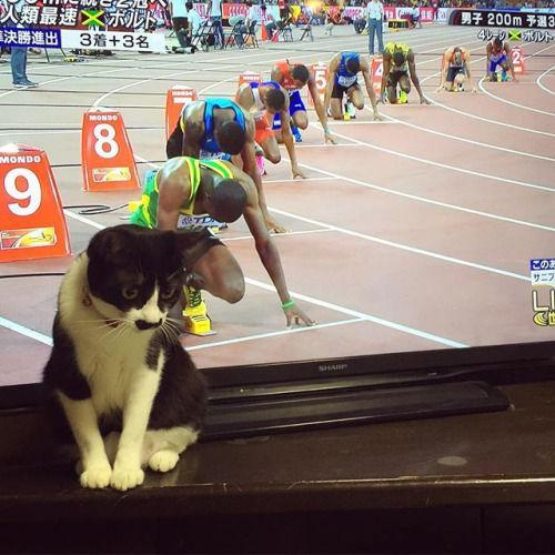 第15回世界陸上、男子200m予選の第10レーンの走者が速そうwww http://t.co/NqiLsXSZAQ | 〓 ねこメモ 〓 http://t.co/mvL6u3GiSQ