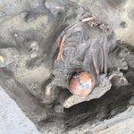 Археологический сезон в Омске заканчивается сенсацией / Новости культуры / Tvkultura.ru http://t.co/vJe2FUSRTX http://t.co/QFy5ugCDXU