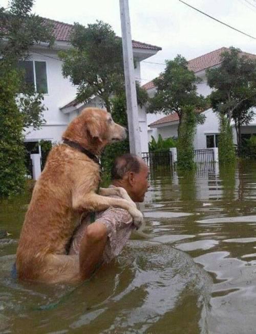 いい話なら、嘘でもかまわないって危険な考えだと思うよ。これはタイの洪水の写真です。 http://t.co/wrJen5IfMa
