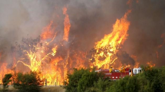 Kebakaran Hutan Di Riau - AnekaNews.net