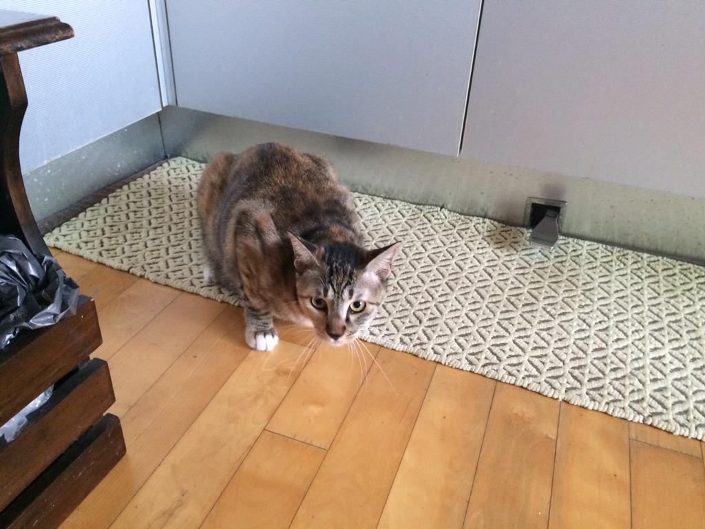야 큰일났다 우리집 아파트 11층인데 길고양이가 두마리나 가택침입했어 얘네 안나가 어떡해 http://t.co/lA2A62dyaj