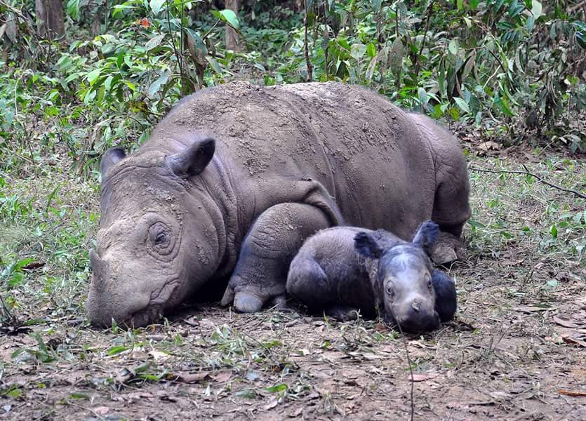 The Sumatran Rhino was declared extinct in the wild today @DiazChrisAfrica the Nn White rhino is next in line http://t.co/h42Ufk8PrM