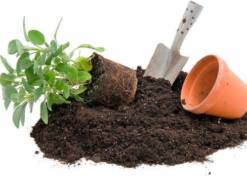 Не хватило почвы для цветочков. Завтра получу деньги и докуплю тут http://t.co/Pm4rWmYurG #АбсолютСад Здесь дешевле http://t.co/Ne8I5hR5LU