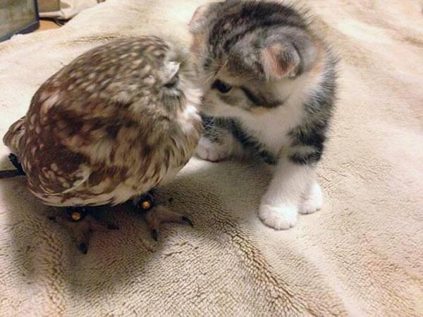 I don't usually post cute stuff, but look! It's an owl and a pussycat… <dies of cute> http://t.co/ge4nc8Cir0