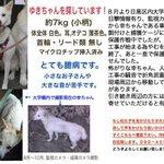 """[探してます]#拡散希望 #迷子犬 """"アリスの会""""保護犬が #東京都 #大田区 で逸走!最新目撃情報上がりました!白い小型のコです。#目黒区 周辺の方ご協力お願いします!詳細は→https://t.co/1HW4ycdVE7 … https://t.co/VwkLCW0xjw"""