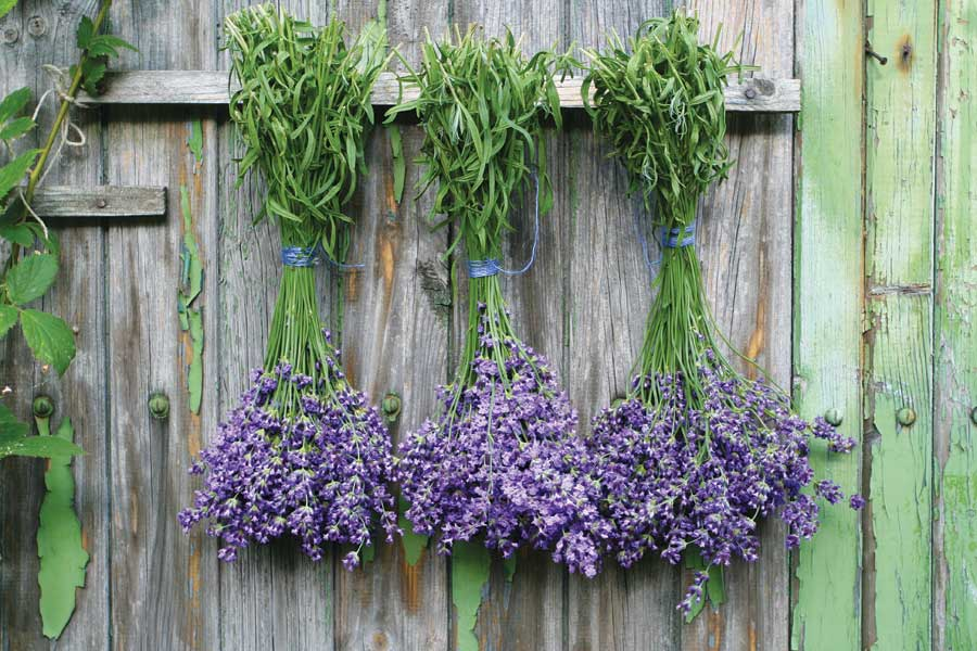 Preserve your homegrown herbs with simple, time-tested strategies. http://t.co/0f6QxPlANy http://t.co/AeNKjXiK7z