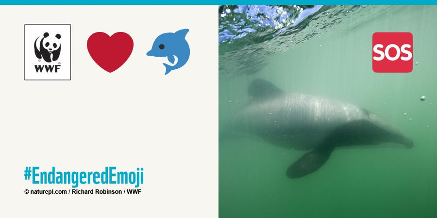 RT @WWF: ???? Due to entanglement, only 55 Maui's Dolphins remain #WorldAnimalDay #EndangeredEmoji http://t.co/B9BWioNaQ1 http://t.co/DYXPtWV4…