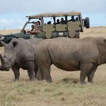 107 wildlife species face extinction in Kenyan parks http://t.co/uF2Pp4HCtQ http://t.co/RLihs92xrR