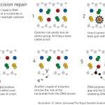 #NobelPrize 2015 Chemistry Laureate Tomas Lindahl's discoveries concern base excision repair: http://t.co/qdkZM4albm