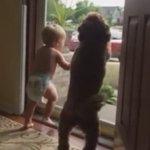 Bebê e cão ficam em êxtase ao ver pai da criança voltando para casa http://t.co/CxGlzj6ioe #G1 http://t.co/yyBm3yDpV2