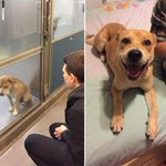 Dogs before and after adoption... http://t.co/a1oL0wox1N