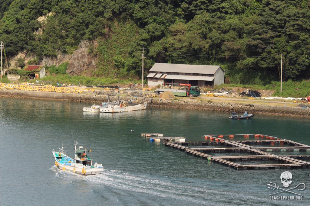 RT @CoveGuardians: 1025am: BLUE COVE! 12 empty boats return to the harbor.  #tweet4taiji  #OpHenkaku http://t.co/qSHVhhoxVY