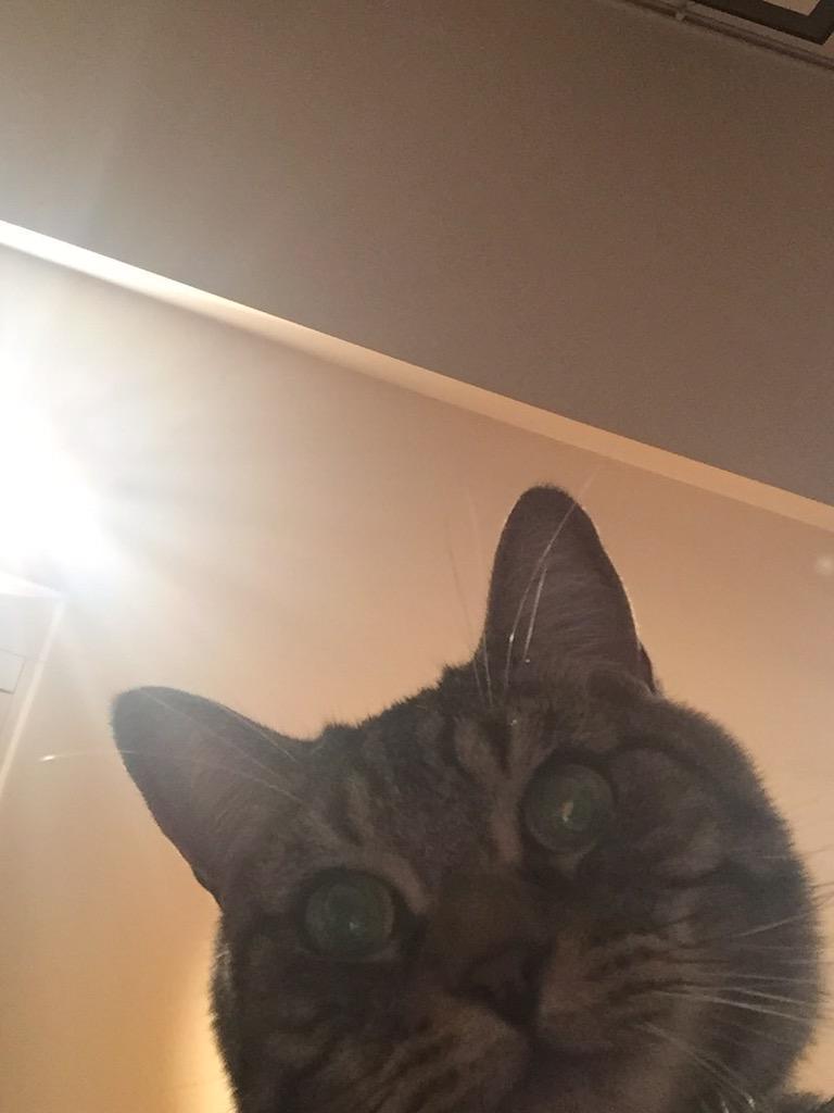 仕事してる間に、チビ猫がドヤ顔で自撮りに成功していた。 http://t.co/lDzoEWB2ia
