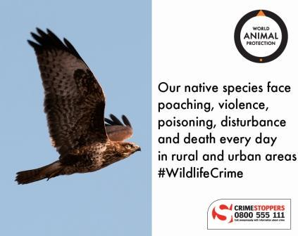 Did you know all UK birds are protected by law? Help stop #wildlifecrime: if you see it, tell us! 0800 555 111. https://t.co/CxL38IGVOu