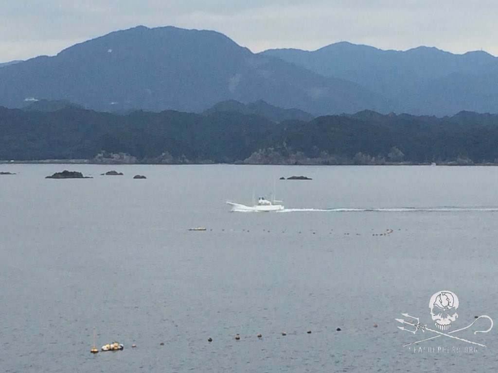 RT @CoveGuardians: 1010AM Last boat back. We have another BLUE COVE DAY! #tweet4taiji https://t.co/nn0FXgn1ra