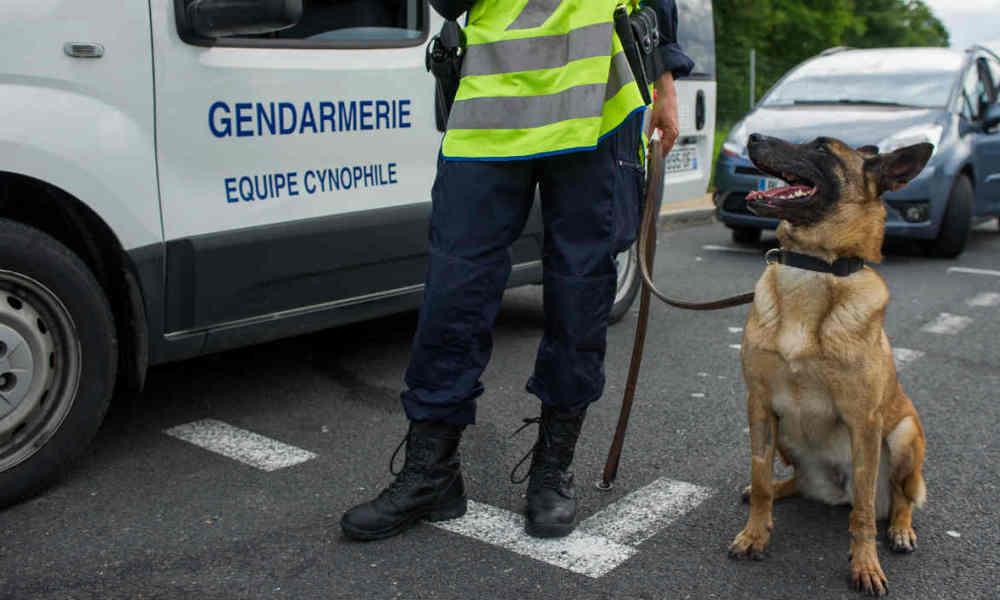 Assaut à #SaintDenis : un chien policier tué pendant l'assaut https://t.co/vZJC188Pzw