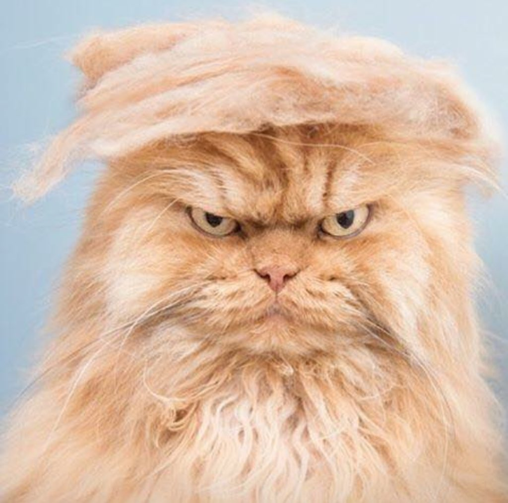 #BrusselsLockdown #Trump2016  ...when Twitter hashtags collide. https://t.co/nsthaHiGGy