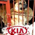 🔉CAMPAIGN🔉 #BoycottCRUELTY #BoycottKOREA ➡NATION OF .@KIA https://t.co/wLyhcaUzJO 🚫STOP TERRIBLE #DogMeatTrade https://t.co/wepBAcnsHv