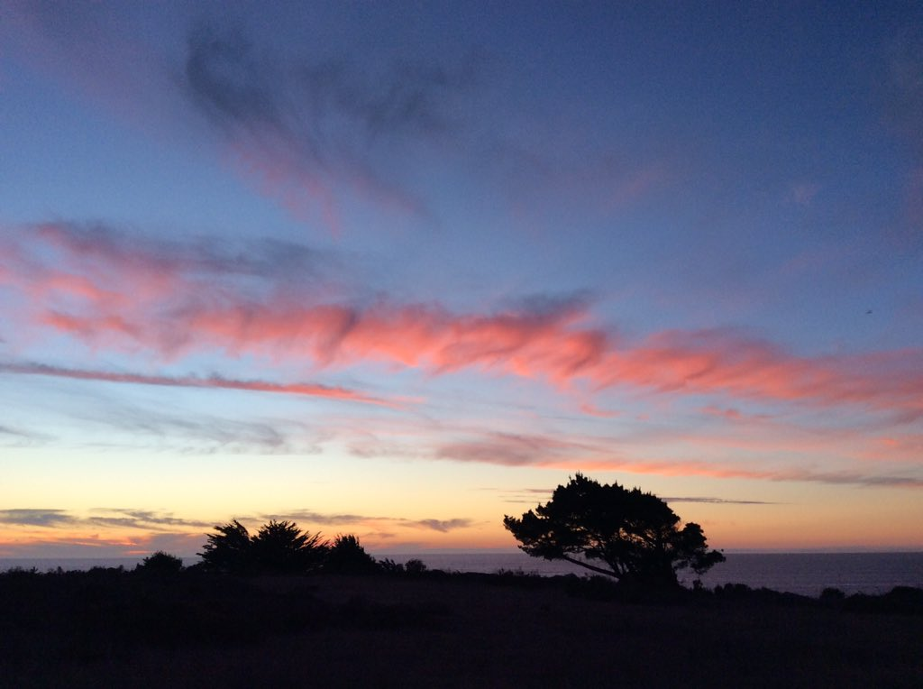 @sunset_wx Elk on the Mendocino coast. https://t.co/qqzJzLYr63