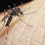 O que se sabe (e o que falta saber) sobre relação entre zika vírus e microcefalia https://t.co/b3b34b8GsW https://t.co/aUMzs6c1B0
