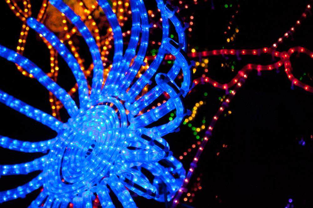 Don't miss River of Lights at #ABQ Botanic Garden: https://t.co/7SwbFMoz9W https://t.co/6Avlokw3FX
