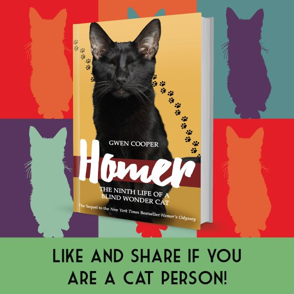 The new book about Homer the Blind Wonder Cat is here! Get it now at https://t.co/3UhTQDMkXn :D #Homer https://t.co/HMeVA9VAHL