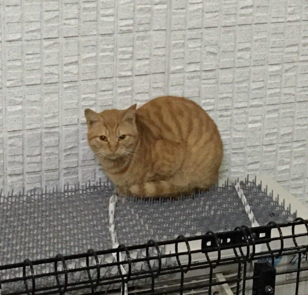 猫とPCケース 51台目 [無断転載禁止]©2ch.netYouTube動画>16本 ->画像>962枚