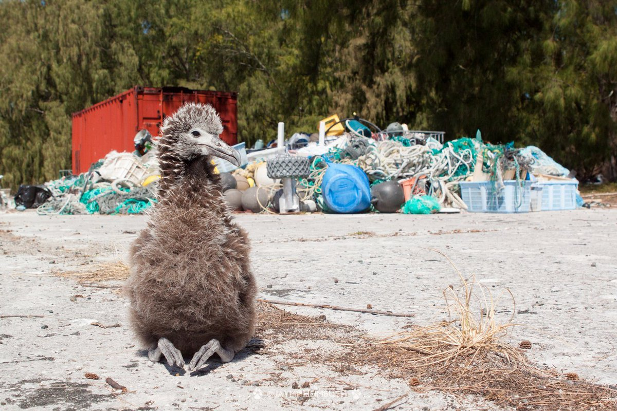 90% of sea birds have eaten plastic! 9 ways to reduce plastic use today https://t.co/MGHR0tihdG #nationalbirdday https://t.co/VLVLmnjzxM