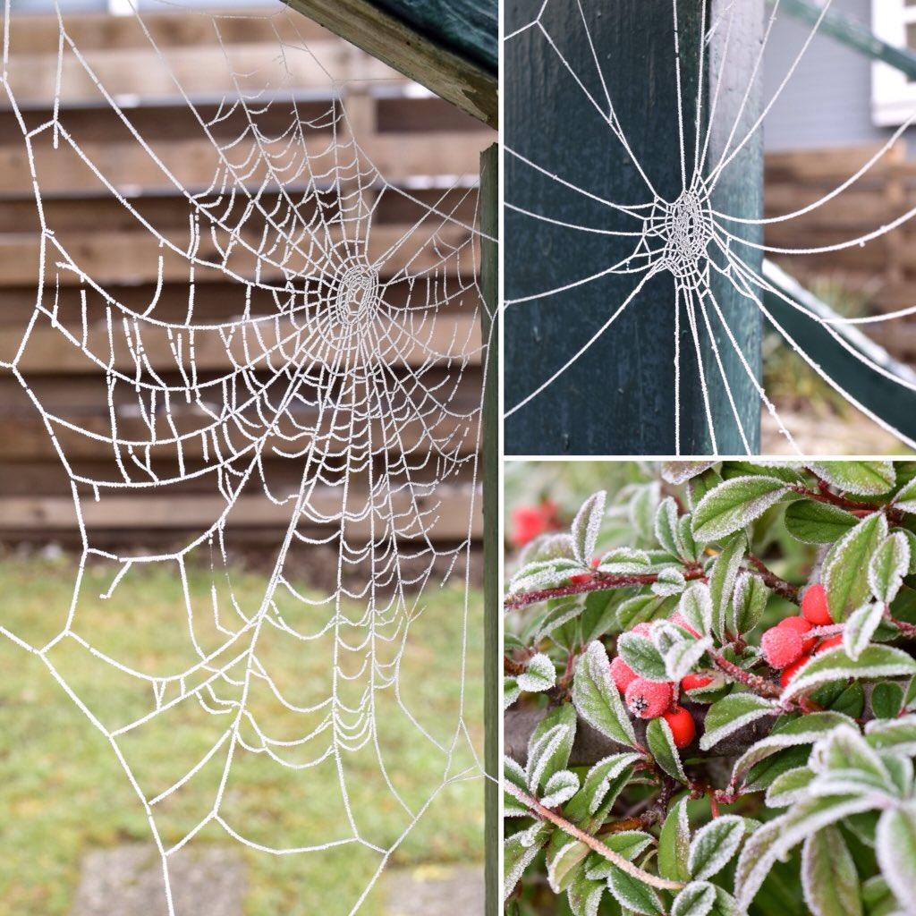 ただ今、外は0度。裏庭の植物が凍ってて、蜘蛛の巣がレース編みになってた。 It's frozen outside! Someone made beautiful laces.  #vancouver https://t.co/fgxfabllw6