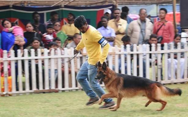 Dog show draws large crowds