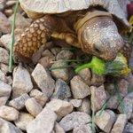 #TurtleTuesday #mydayinla #la * ok Im awake* who can sleep in this #la winter heatwave* https://t.co/5kqjC2JlcP