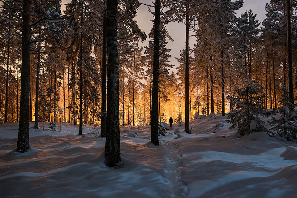 Mysterious Glowing Light In A Finland Forest | Photography by ©Mikko Lagerstedt https://t.co/8TfdhVEKKQ