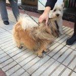 Perro extraviado en #CalleEmbajadores Veterinarios del @AyuntamientoVLL le cuidarán hasta que le recoja su dueño???? https://t.co/U6NcTTQ8Fn