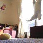 ぼよん!ぼよん! ミルコ 重力無視で跳ねてます!! https://t.co/H7OZ6f5WrL