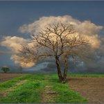 Ook bomen kunnen in de wolken zijn: https://t.co/OfBkYLTVyd