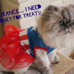 My cat needs to win $50K so she can buy more treats! #EsuranceSweepstakes @esurance https://t.co/ar5kwnOK93